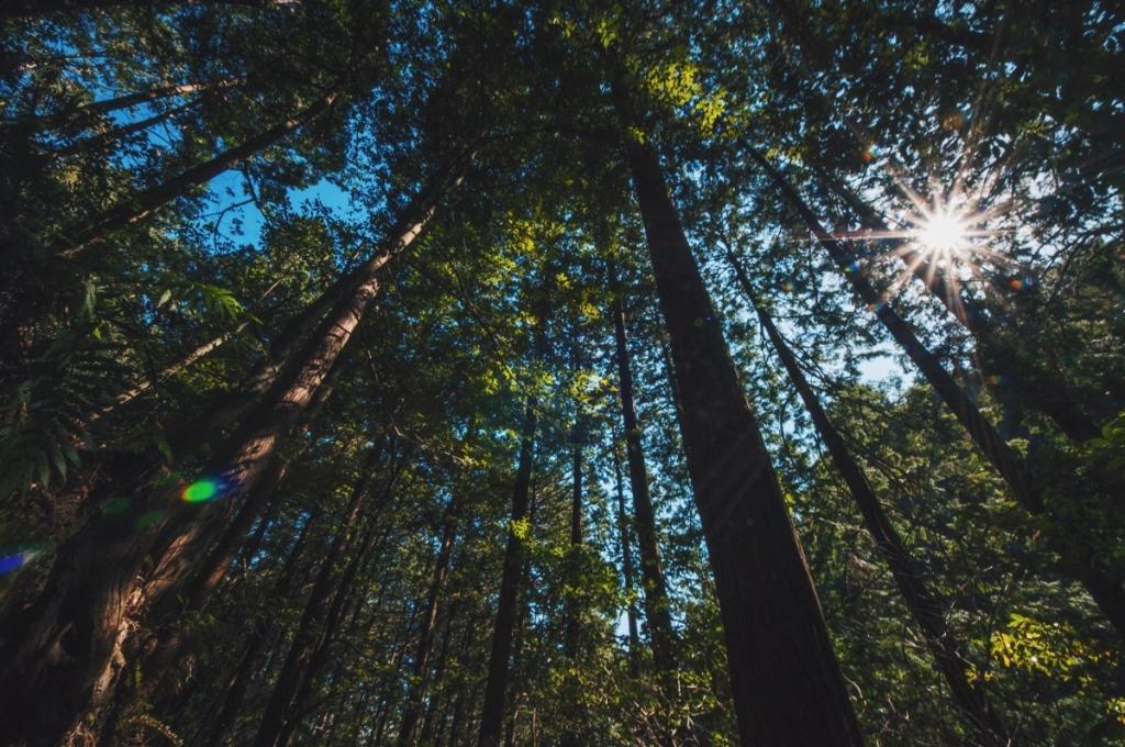 Aburayama Citizens' Forest